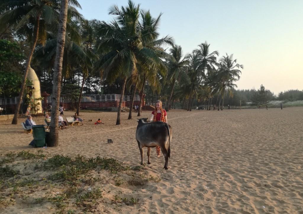 Kühe am Strand? In Indien absolut keine Seltenheit