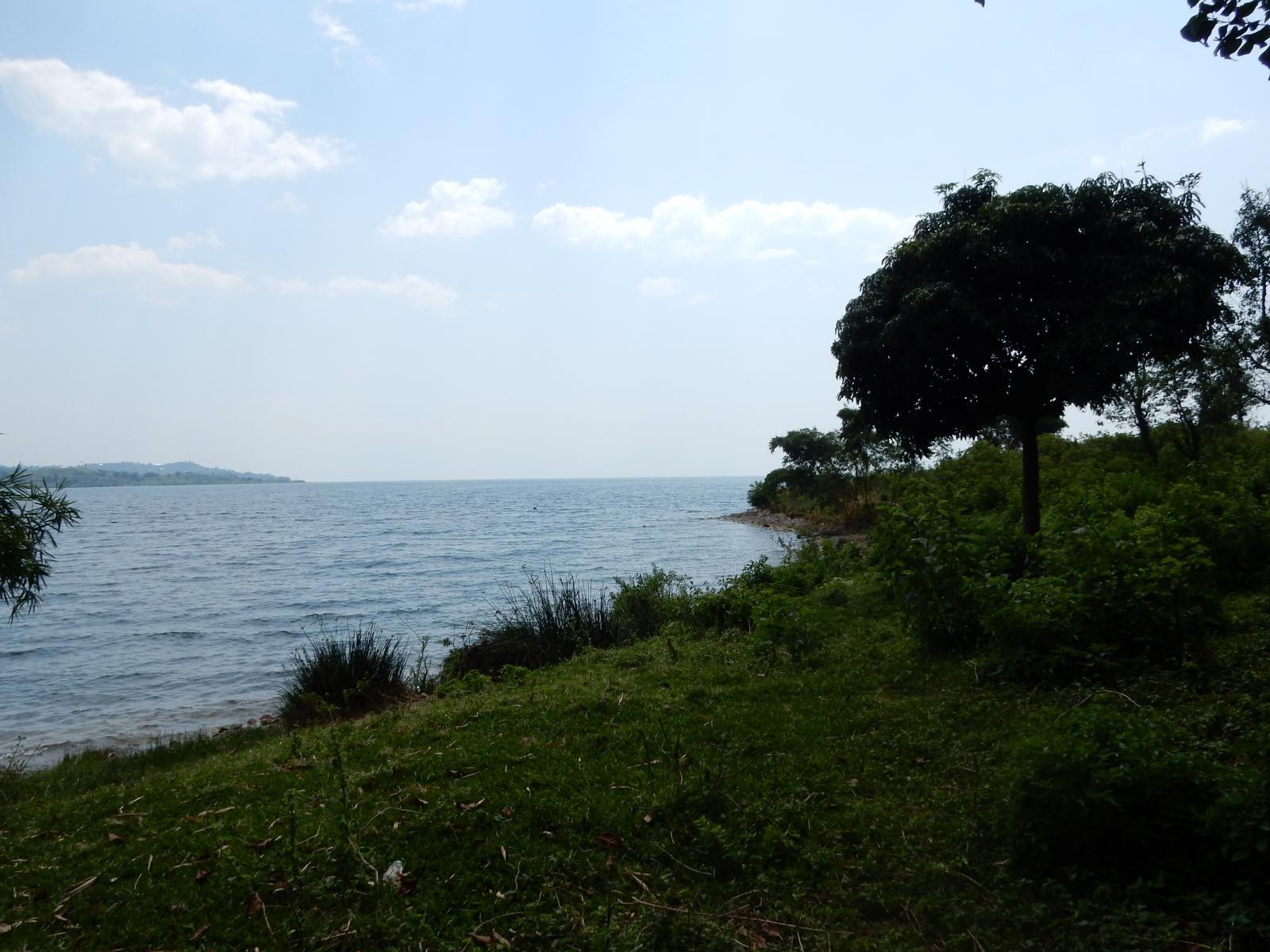 Kibu See